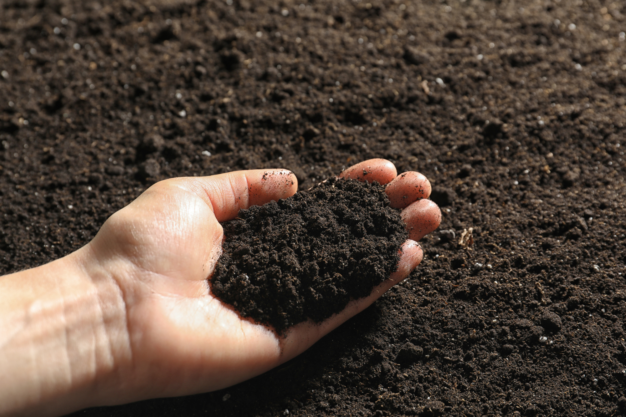 Raw Loam (unscreened topsoil) - Black Gold Loam Services